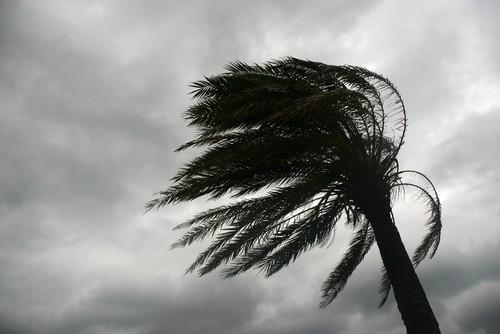Natural disaster tree